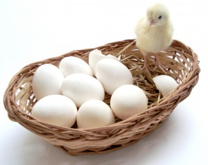 eggs_basket-300x238