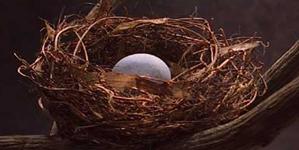 MS-Nest Egg