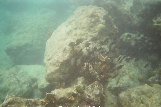 Curacao - Underwater & west coast beaches-07
