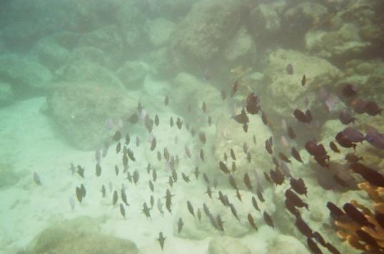 Curacao - Underwater & west coast beaches-13