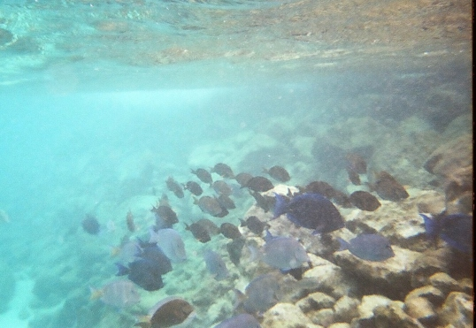 school of fish at the jetty
