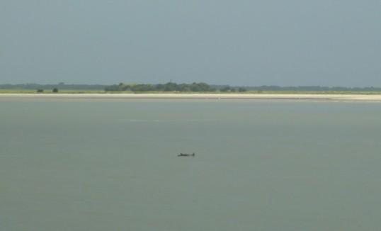 Dolphin traffic