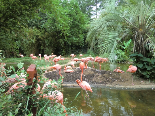 Customary Flamingo pic