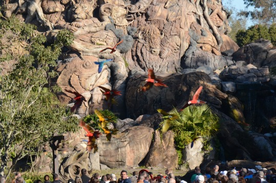 Parrots fly in to the Tree Of Life to open the day in the Animal Kingdom