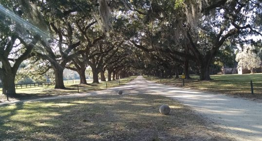 Avenue of Oaks ~ ask me about those big balls!